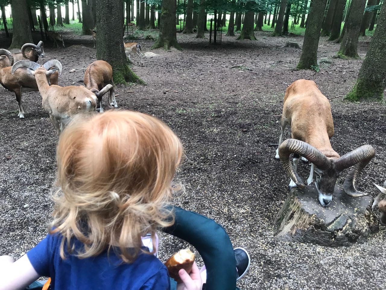 Mit Papa Im Wildpark Poing Travelingkinder